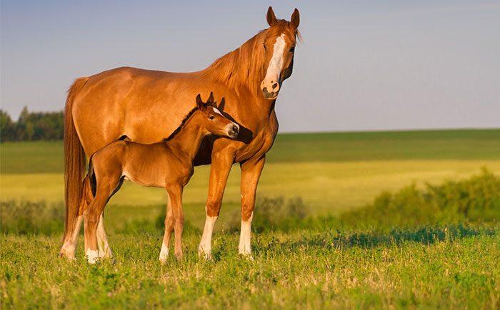 teemateippi-teematapetti-kuvateippi-kuvatapetti-idea-seinateippaus-teippaukset-1-hevoset